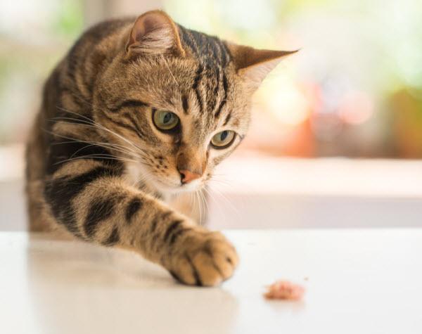 Vetaround - Beautiful-feline-cat with her treats