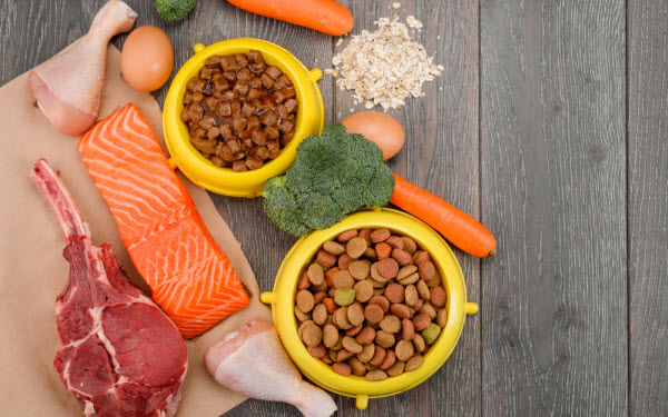 Vetaround - Bowls-of-wet-foods-and-kibbles